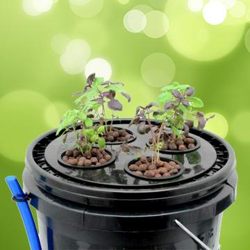 Системы выращивания